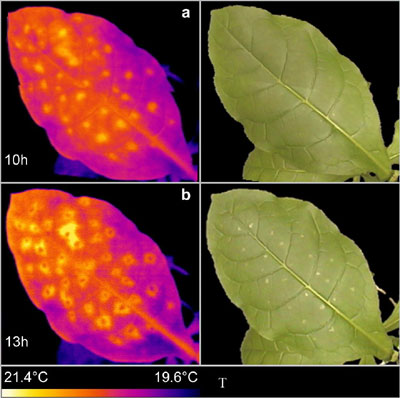 thermo images